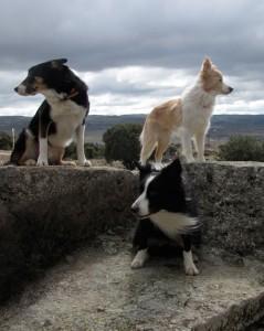 Jett, Tyler y Scott: de paseo por el campo