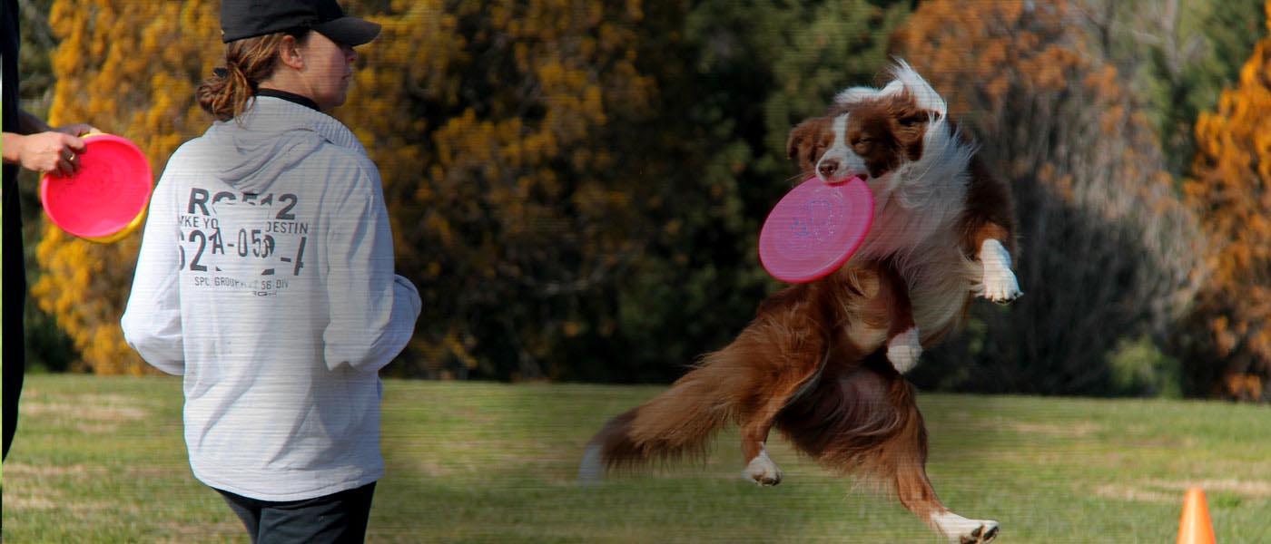 Aprende disc dog con una filosofía de juego en la que prima pasar buenos ratos con tu perro