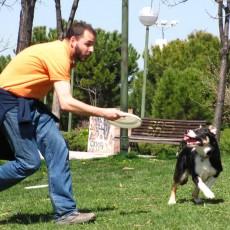 ¿A qué edad puedo comenzar a enseñar disc dog a mi perro?